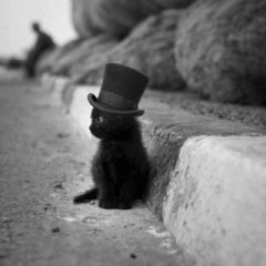 Cute kitten with top hat